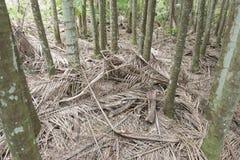 Rainforest leaf litter. Port Macquarie South Wales rainforest leaf litter royalty free stock photography