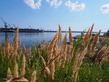 Port maritime marchand Photographie stock libre de droits