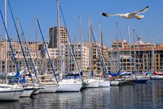 Port of Marseille. With a seagull in flight in foreground Stock Photos