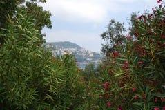 Port of Nice, Promenade des Anglais, vegetation, ecosystem, flora, plant. Port of Nice, Promenade des Anglais is vegetation, plant and sky. That marvel has royalty free stock photos