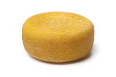 Port salut cheese Royalty Free Stock Photos