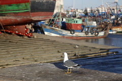The port. A seagull in the port or tanger, morocco Stock Image