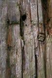 port träknarled stolpe Royaltyfria Foton
