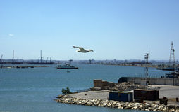 port tunis Arkivbilder
