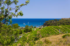 Port-Vendres beach. PORT-VENDRES, FRANCE – JUNE 26 2016: View of the coast near Port Vendres with vineyards and almond trees in foreground and Mediterranean Stock Photography