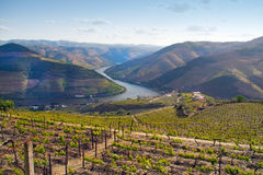 Port Wine Vineyards Landscape Stock Images