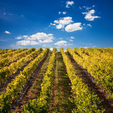 Port Wine vineyards in Portugal. Landscape Photo : Beautiful view over the Port Wine vineyards in Douro, Portugal on Fall / Autumn royalty free stock image