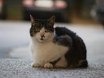 Porta affianco del gatto Fotografie Stock Libere da Diritti