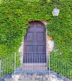 Porta con l'edera Immagini Stock Libere da Diritti