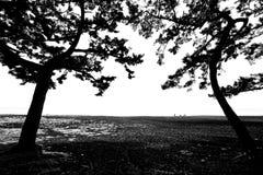 Porta da árvore dos gêmeos e a praia no tempo do por do sol em Shizuoka, Japão imagem de stock royalty free