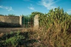 Porta da fazenda e cacto de florescência ao lado da cerca foto de stock royalty free