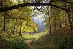 Porta da floresta Fotos de Stock