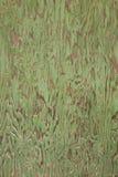 Porta da madeira compensada da casca Fotografia de Stock