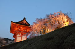 Porta de Deva ou árvore de Niomon e de Sakura fotografia de stock royalty free