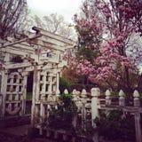 Porta de jardim e cerca de madeira Fotos de Stock Royalty Free