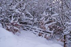 Porta de madeira coberto de neve nas madeiras imagens de stock