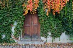 Porta de madeira velha coberto de vegetação com a hera Fotos de Stock