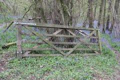Porta de madeira velha nas madeiras Imagem de Stock Royalty Free