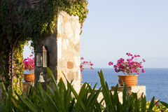 Porta de pedra com folha e a planta Potted Fotografia de Stock Royalty Free