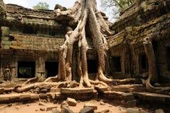 Porta del tempiale, Ankor Wat, Cambogia Immagini Stock
