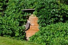 Porta di legno della cantina con il villaggio invaso dei rampicanti Immagine Stock Libera da Diritti