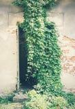 Porta e ervas daninhas quebradas Imagens de Stock Royalty Free