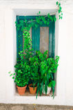 Porta e piante Fotografie Stock Libere da Diritti