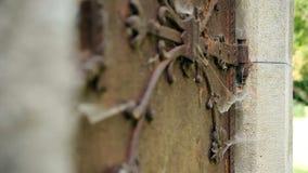 Porta oxidada velha do mistério do ferro vídeos de arquivo