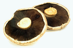 Portabella Mushrooms back side view. Royalty Free Stock Photography