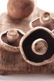 portabello de champignon de couche Images libres de droits