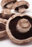 portabello de champignon de couche Images stock