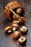 Portabello Mushroom Stock Photo