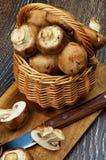 Portabello Mushroom Stock Photography