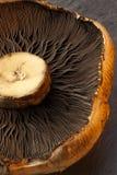 Portabello Mushroom Stock Photos