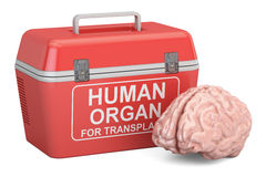 Portable fridge for transporting donor organs with human brain, Royalty Free Stock Photos