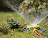 Portable sprinkler sprays water on the lawn ang gras. Portable sprinkler plentifully watered bushes and lawn grass Stock Photos