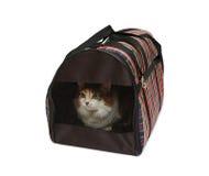 Portador del animal doméstico con el gato Imagen de archivo libre de regalías
