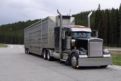 Portador del ganado Imagen de archivo libre de regalías