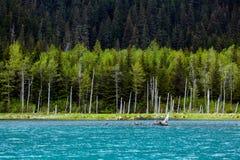 Portage Valley湖,阿拉斯加 库存照片