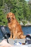 Portait agradável do cão Imagem de Stock