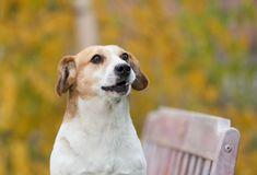 Portait of cute dog in park stock photography