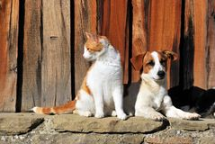 Portait of a dog and a cat stock image