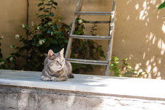Portait of grey cat in Greece. Grey nice cat in the shadow and ladder. Greece, Kos Island Stock Image