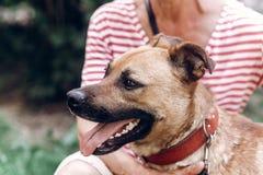Portait heureux de chien, femme étreignant le chien métis mignon dehors, grand Photo libre de droits