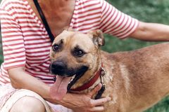 Portait heureux de chien, femme étreignant le chien métis mignon dehors, grand Images libres de droits
