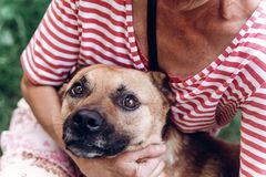 Portait heureux de chien, femme étreignant le chien métis mignon dehors, grand Photographie stock