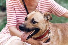 Portait heureux de chien, femme étreignant le chien métis mignon dehors, grand Image libre de droits