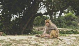 Portait małpa z copyspace Fotografia Stock