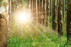 Portal en el bosque a otra dimensión donde criatura desconocida imagen de archivo