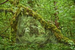Free Portal Vortex In Forest Under Archway Of Moss Covered Tree Stock Image - 193923611